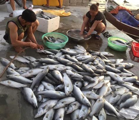 Hà Tĩnh: Không chỉ cá nuôi, cá trong tự nhiên cũng chết, nổi trắng sông