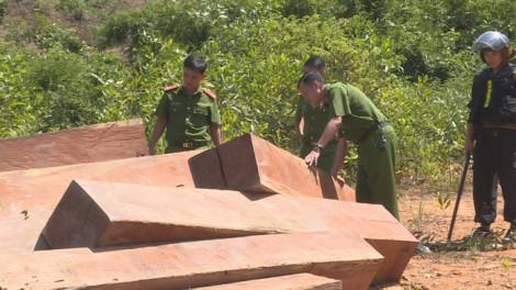 Phát hiện thêm 500m3 gỗ trong vụ thôn trưởng tham gia phá rừng