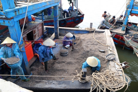 Ngư dân trúng đậm sò nhám, kiếm hàng chục triệu mỗi ngày