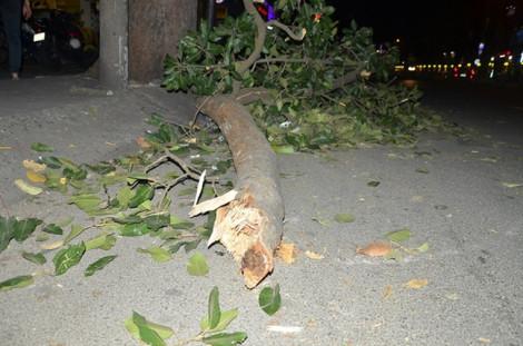 Đến trường ôn thi học sinh giỏi, nữ sinh lớp 9 bị cành cây rớt trúng, tử vong