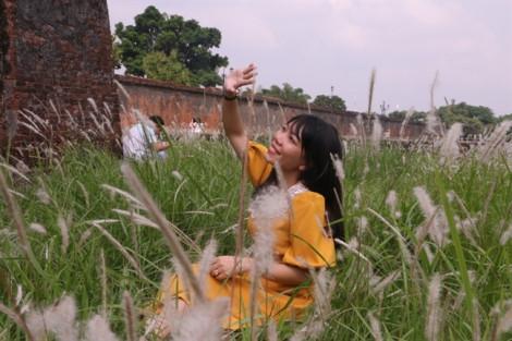 Hoa tranh nở trắng muốt bên hoàng thành xứ Huế, du khách hào hứng tạo dáng