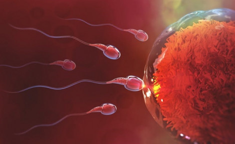 Mentinfo – bí quyết tăng chất lượng tinh trùng để sinh con khỏe mạnh