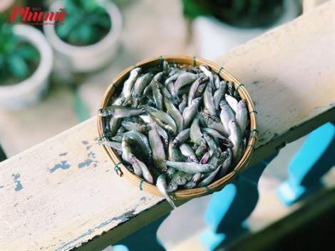 Đầu mùa nước nổi bỗng dưng thấy thèm món cá linh chiên bột