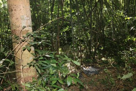 Đi săn trong rừng cấm, trúng đạn tử vong