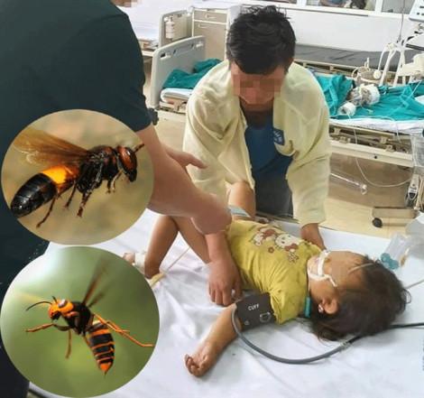 Đàn ong tấn công một gia đình khiến bé gái 3 tuổi trên đường đi học về tử vong