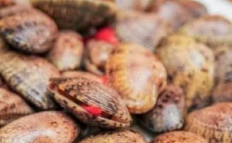 Cà Mau chính thức xác nhận không có ca tử vong do ăn sò lụa đỏ