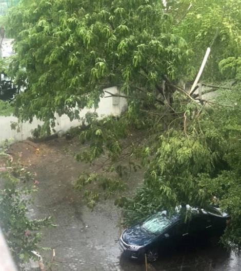 TP.HCM: Mưa giông, gió lốc làm cây xanh gãy đổ