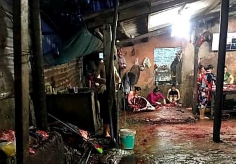 Xả nước thải mổ bò xuống hộ thành hào kinh thành Huế, bị phạt 70 triệu đồng