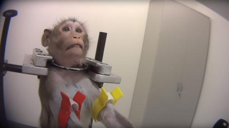 Ghi hình lén ở Đức, tố cáo thử nghiệm tàn ác trên động vật