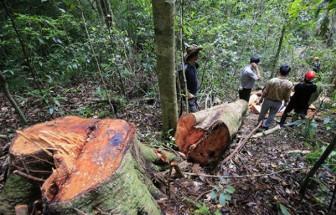 1ha rừng tự nhiên có giá trị gấp 18ha rừng trồng lại