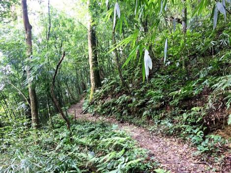 Báo cáo đánh giá tác động môi trường của dự án Tam đảo II  có nhiều chữ ký khống