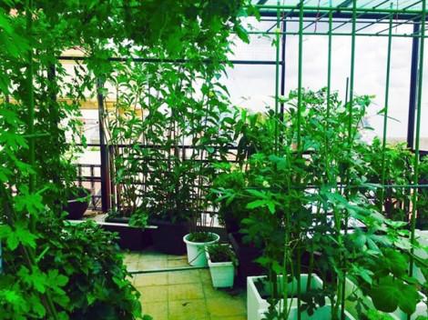 Vườn rau mướt mát của nhà thiết kế Thuận Việt
