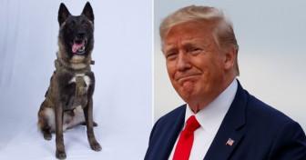 'Siêu cảnh khuyển' được Trump tuyên dương nhờ thành tích săn lùng thủ lĩnh IS