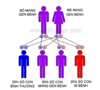 Nhóm người nào ở Việt Nam mang gen Thalassemia cao nhất cả nước?
