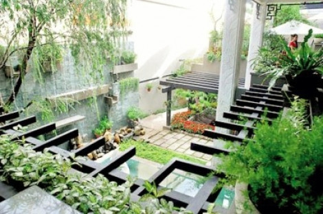 Vườn rau xanh tươi của nghệ sĩ Trung Dân