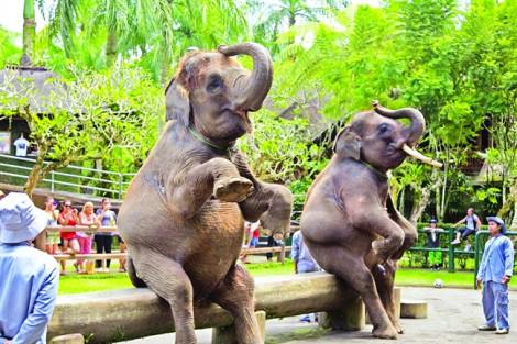 Du lịch trải nghiệm bức hại nhiều loài động vật
