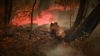 Hai bang nước Úc báo động 'thảm họa' cháy rừng