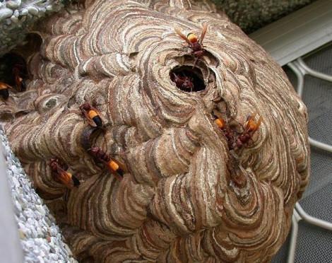 Bệnh nhân xuất hiện cảm giác như ai bóp cổ sau khi bị ong chích