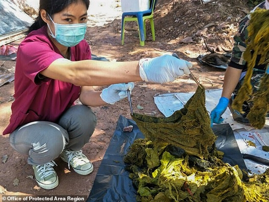 Tim thay 7kg rac thai trong bung mot con nai o Thai Lan