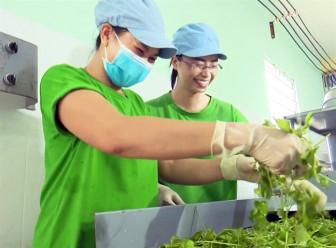 Nhóm bạn trẻ muốn biến hơn 500 loại rau thành bột như matcha