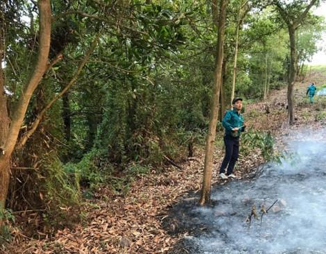 Nguy cơ thiệt hại hàng trăm héc ta rừng sau vụ cháy ở Bắc Giang
