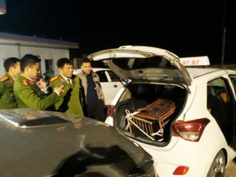 Dùng xe taxi chở gấu 100kg đi tiêu thụ trong đêm