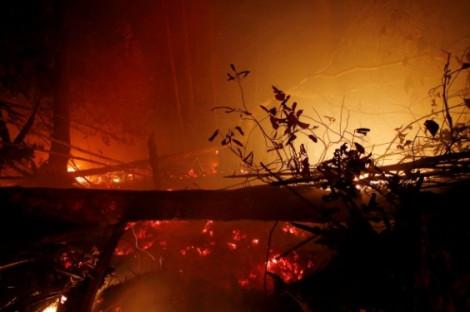 Cháy rừng ở Indonesia gây thiệt hại kinh tế khoảng 5,2 tỷ USD