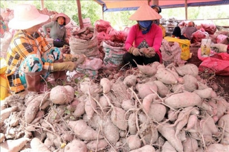 Giá trị nông sản Việt còn thấp do chỉ xuất thô