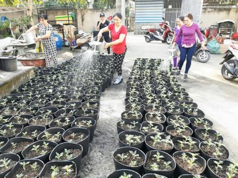 Trồng hơn 1.000 cây vạn thọ pháp để tặng hội viên