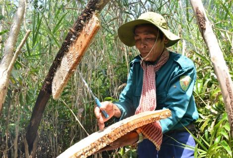 Nghề gác kèo ong, muối ba khía trở thành di sản văn hóa phi vật thể