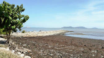 Thủ tướng yêu cầu đánh giá độc lập đối với dự án lấn biển Cần Giờ