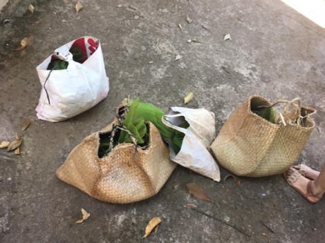 Phát hiện 10 cá thể cầy hương quý hiếm vận chuyển trái phép về Việt Nam