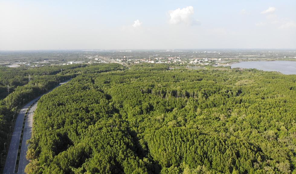 Xã An Thới Đông, H.Cần Giờ cũng có hơn 43ha rừng bị loại khỏi quy hoạch bảo vệ rừng