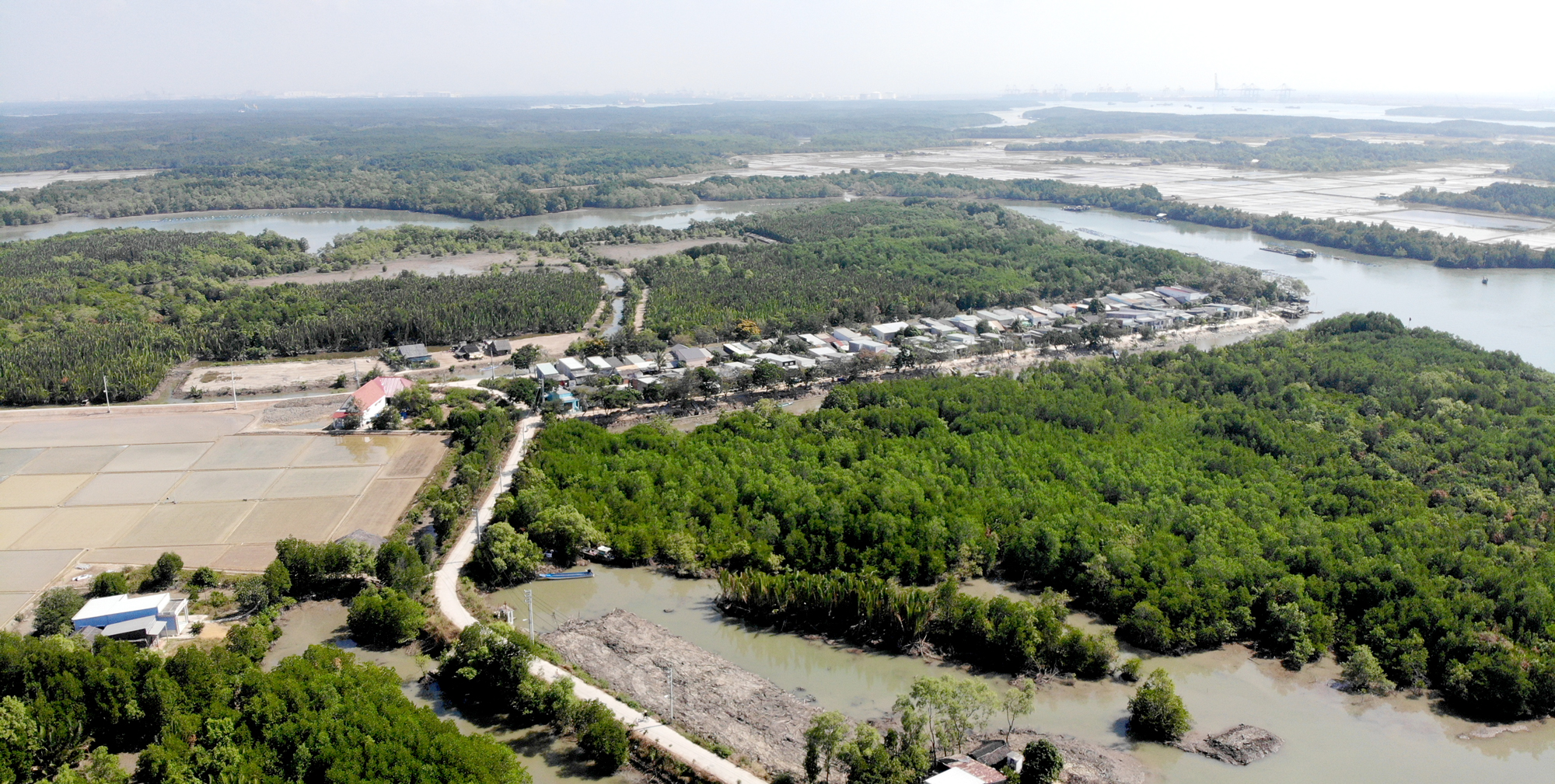 Nhiều bất thường trong vụ loại bỏ 73ha rừng Cần Giờ