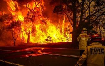 Cháy rừng Úc cướp đi mạng sống 25 người, giết chết hàng triệu động vật