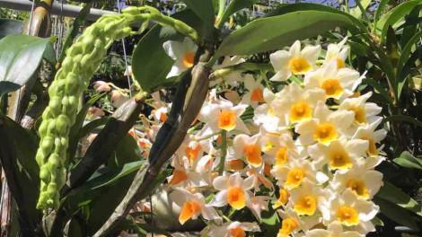 Ngắm hoa kiểng lạ vượt đường xa hội tụ ở Sài Gòn