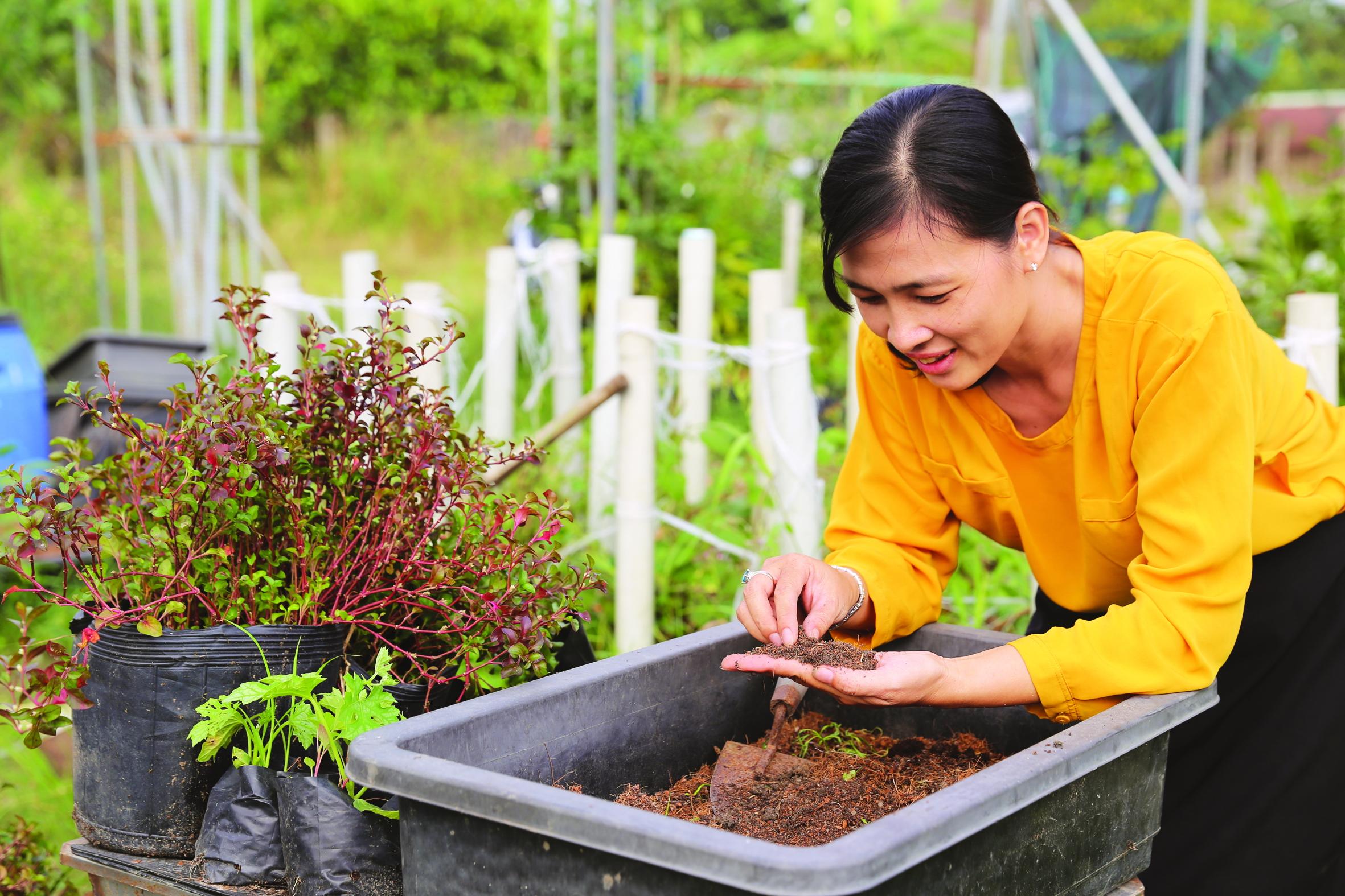 Chị Huỳnh Thị Tố Uyên kiểm tra đất vừa qua xử lý khử phân bón hóa học trên mảnh vườn ở xã Vĩnh Lộc A, H.Bình Chánh