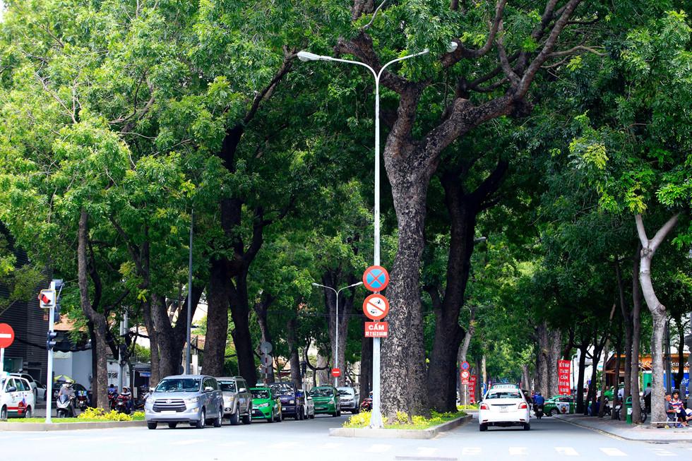 Hàng cây cổ thụ rợp bóng mát trên đường Tôn Đức Thắng nay đã không còn nữa - Ảnh: Ngọc Dương