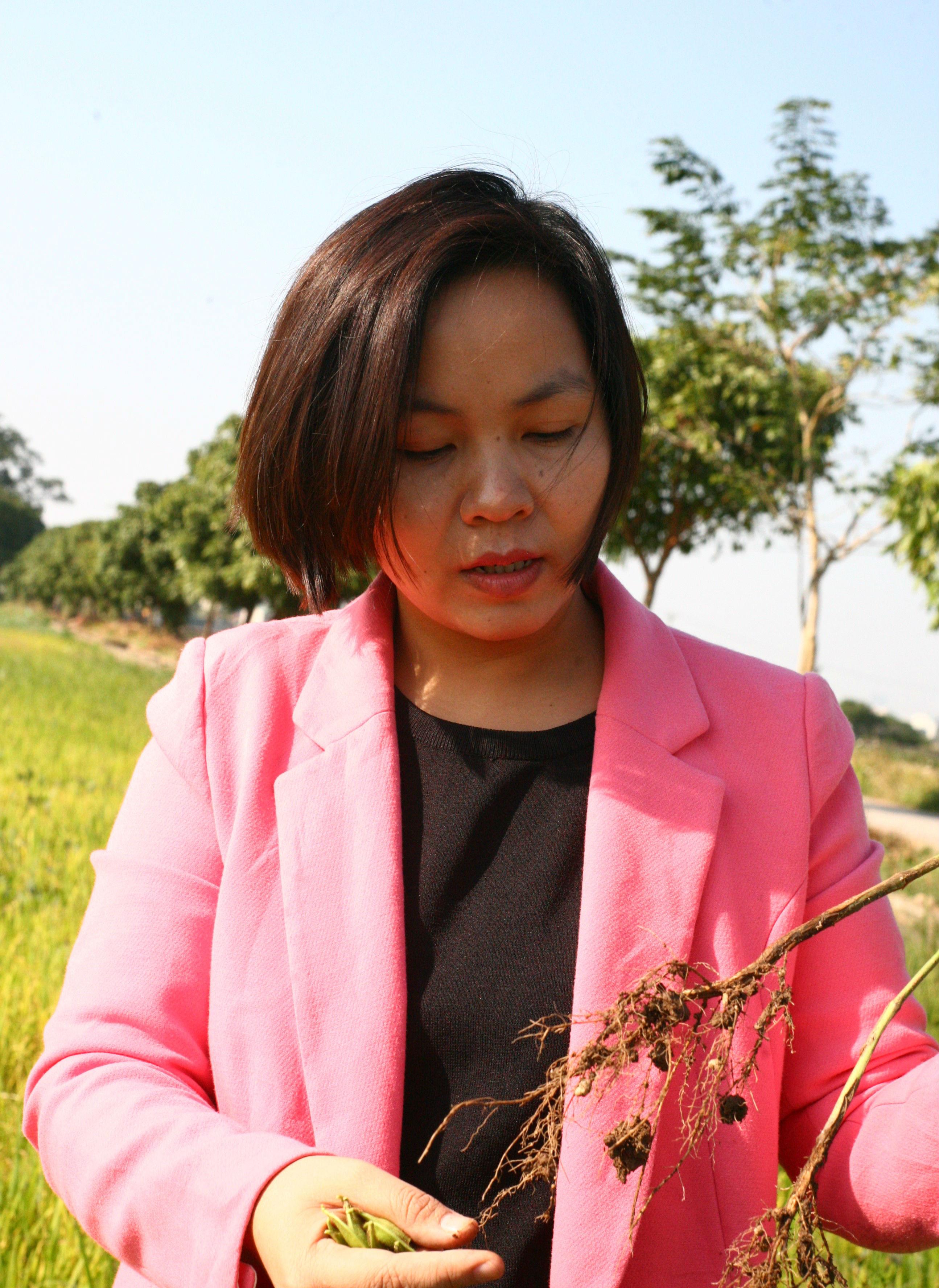 Cánh đồng này được gieo đỗ tương để cải tạo đất trước khi canh tác, mỗi nốt sần trên bộ rễ của đỗ tương đều chứa đạm hữu cơ để 'tặng' lại cho đất mẹ.