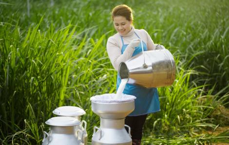 Cô Gái Hà Lan giúp mẹ nuôi con khỏe từ sữa tươi không dư lượng kháng sinh