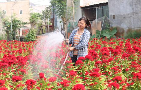 Người trồng hoa có tâm hồn đẹp như hoa