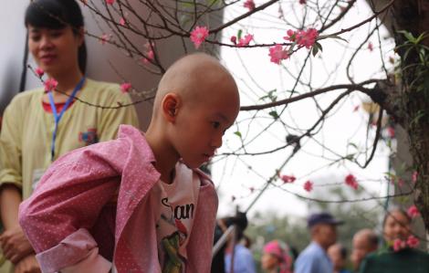 'Bến xe yêu thương' mang Tết đến gần với người bệnh ung thư