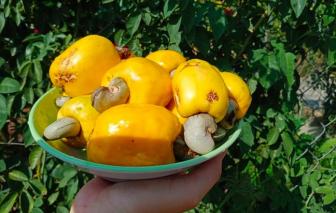 Mùa tết – mùa trái đào lộn hột