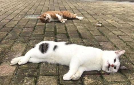 Người dân Trung Quốc ném chó mèo ra đường sau tin đồn vật nuôi có thể lây nhiễm coronavirus