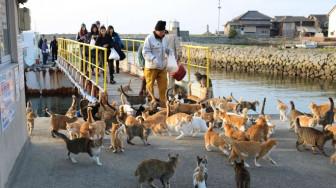 Những bí quyết giúp người Nhật sống thọ