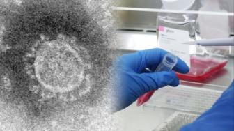 Các nhà khoa học đang chạy đua để tìm ra những phương thuốc chống lại virus corona