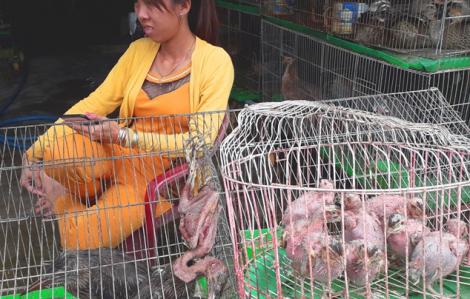 Chống dịch corona: Đã có nhiều hộ kinh doanh ở 'địa ngục chim trời' bị xử lý