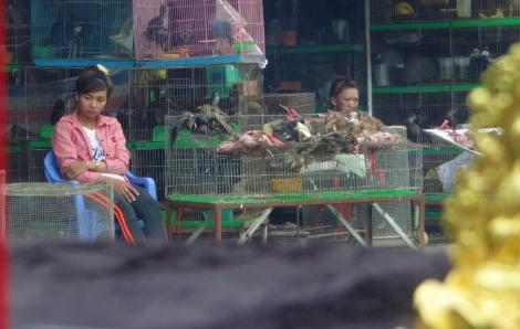 Từ dịch viêm phổi, cần đóng cửa thị trường buôn bán động vật hoang dã