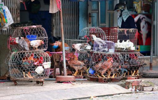 H5N1 có nguy cơ bùng phát, gia cầm sống vẫn vô tư giết mổ trên đường phố Sài Gòn