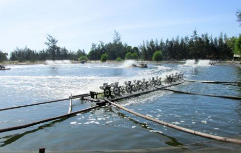 Cách ly một người Vĩnh Phúc vào Quảng Trị xin làm ở hồ nuôi tôm